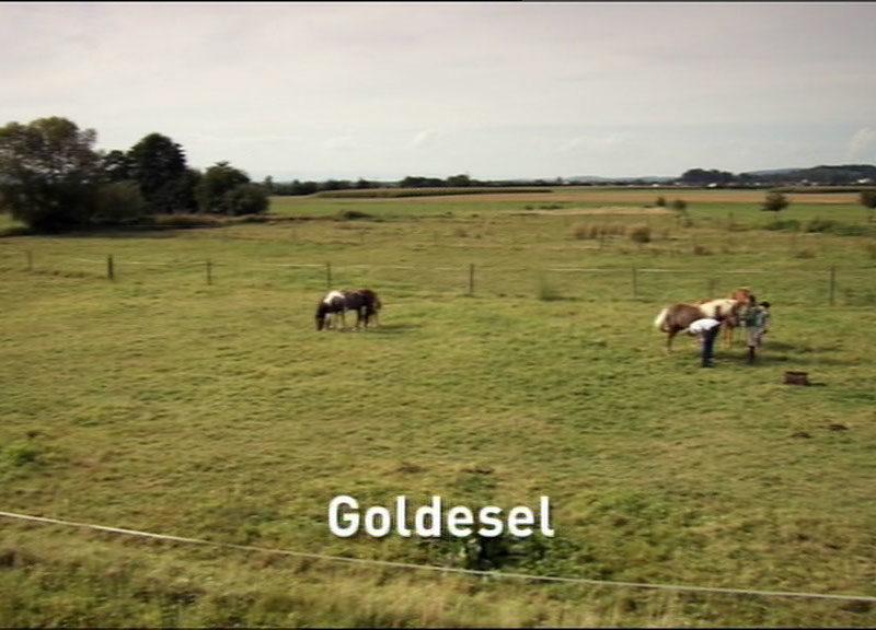 Folge 38 Goldesel